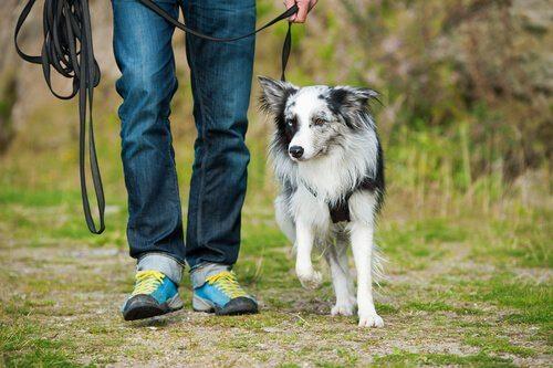 Brèves informations utiles sur la meilleure compagnie d'assurance animale