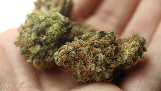 Comment savoir si vous avez du cannabis de qualité ?
